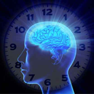 Ritmo circadiano e organi