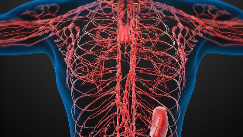 La linfa e il sistema linfatico