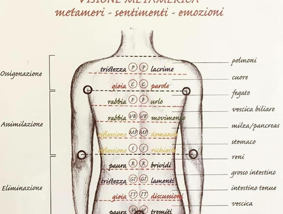 La schiena, i metameri e le fasce emozionali